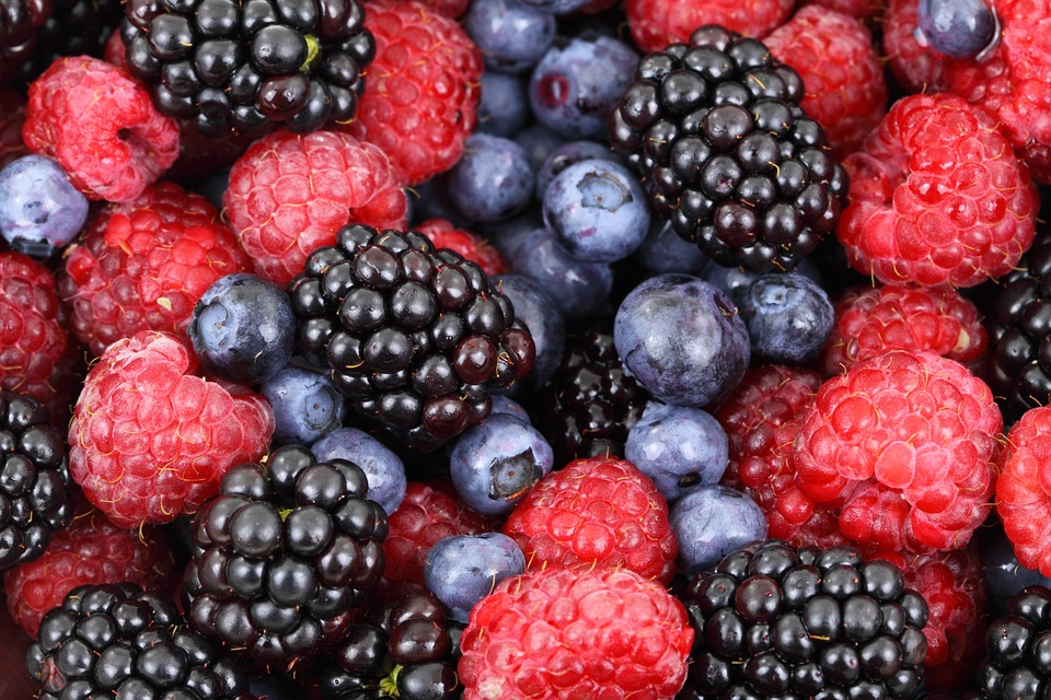 berries for alzheimer's prevention