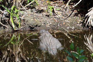 EVERGLADES NATIONAL PARK IN FLORIDA